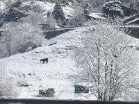 白雪皑皑的风景在奥迪诺
