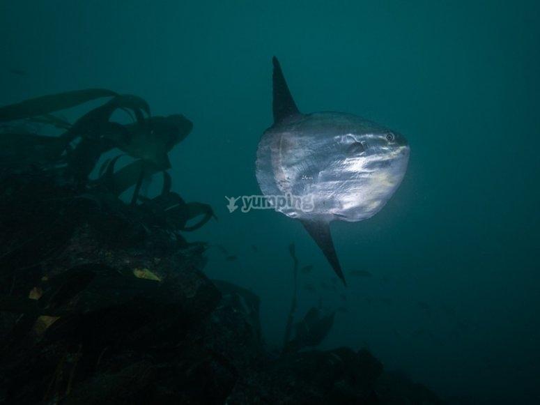 Animali del fondo marino