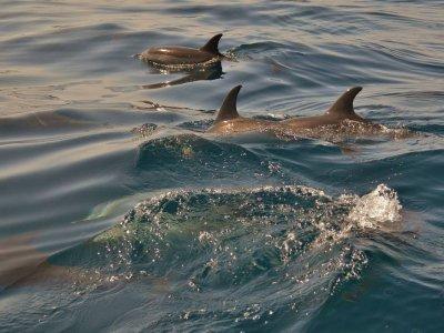 步行去看Dolphins La Palma 2h Children