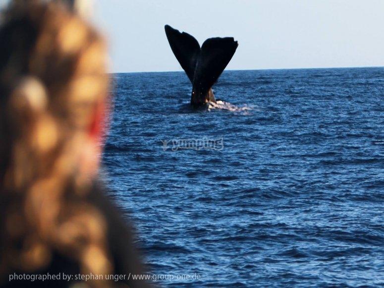 在La Palma观赏鲸鱼