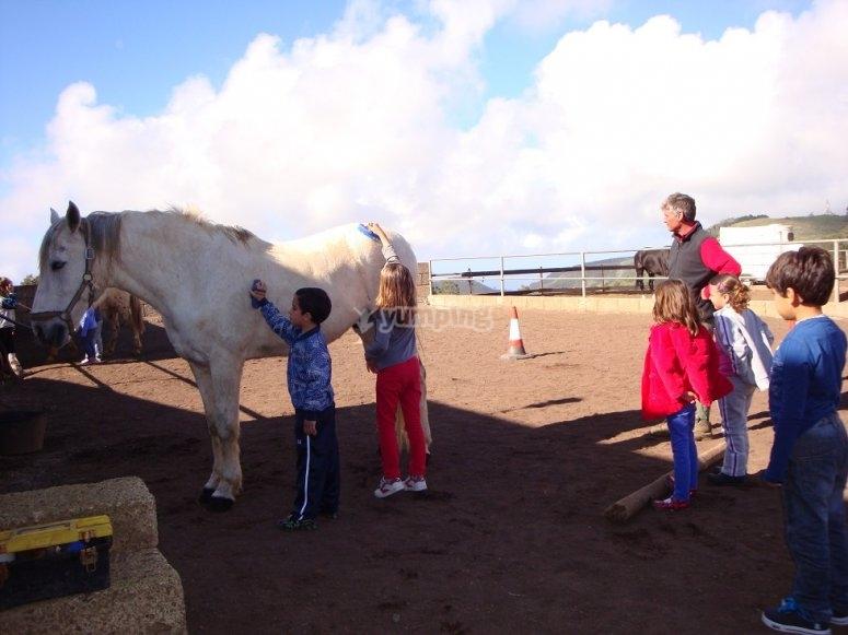 Children washing the horse