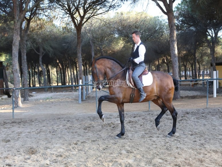 Impresionante caballo