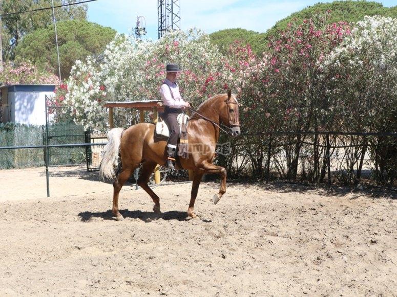 Arte a caballo