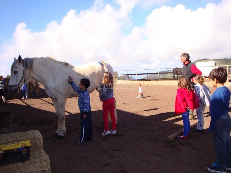 Kids cleaning the horse