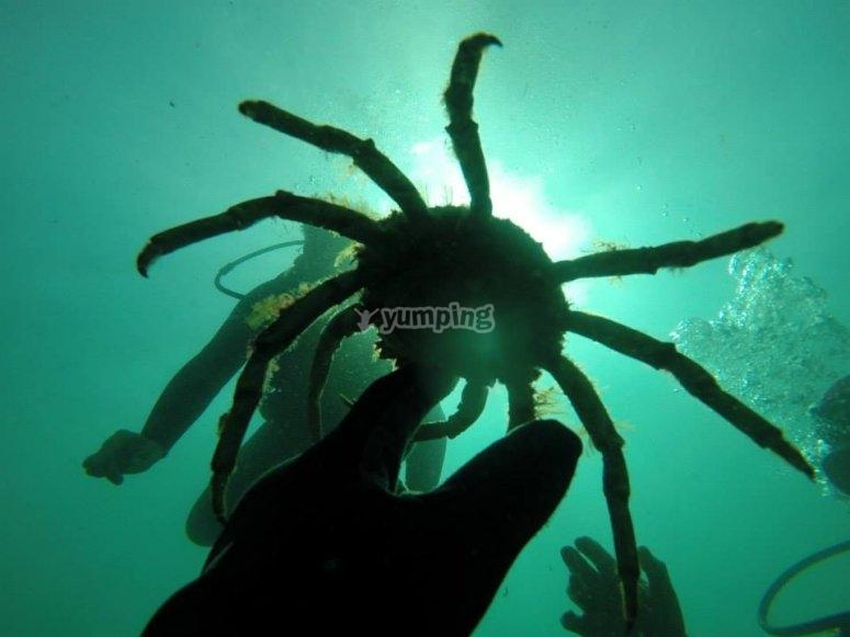Cangrejo bajo el agua