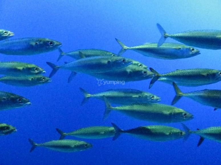 Banco de peces.jpg
