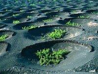 兰萨罗特岛的旅游实践