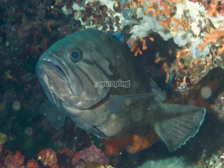 Fauna marina en Formentera