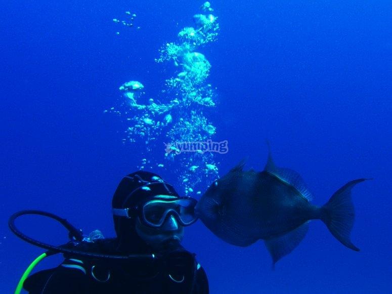 Bucea con la fauna de Formentera