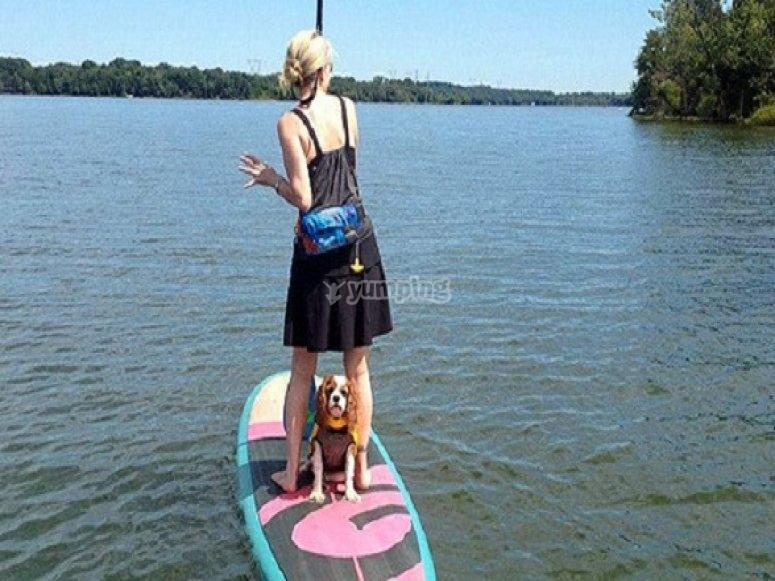 女孩练习桨与她的狗冲浪