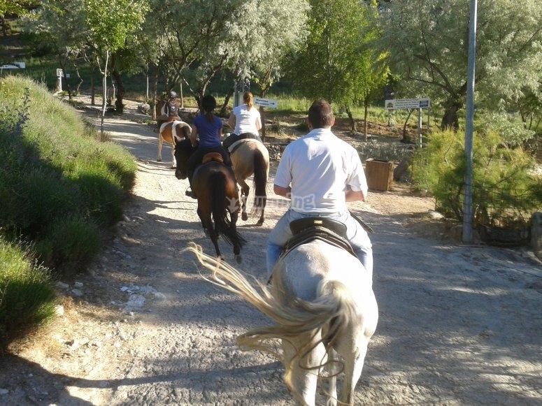 在马路上骑马