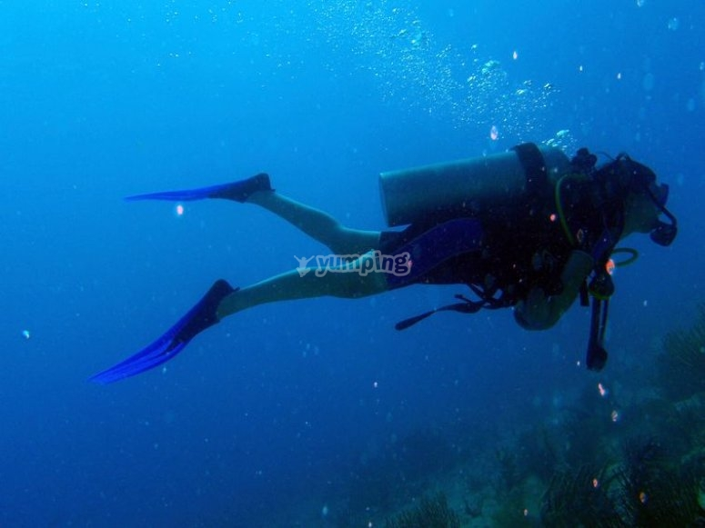Scuba diving at the marine bottom