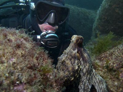 Scuba Diving Baptism in Mouro 3h