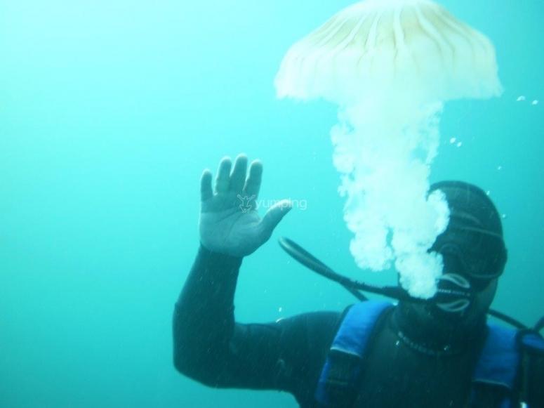 mira la medusa