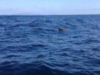 Delfines en el oceano
