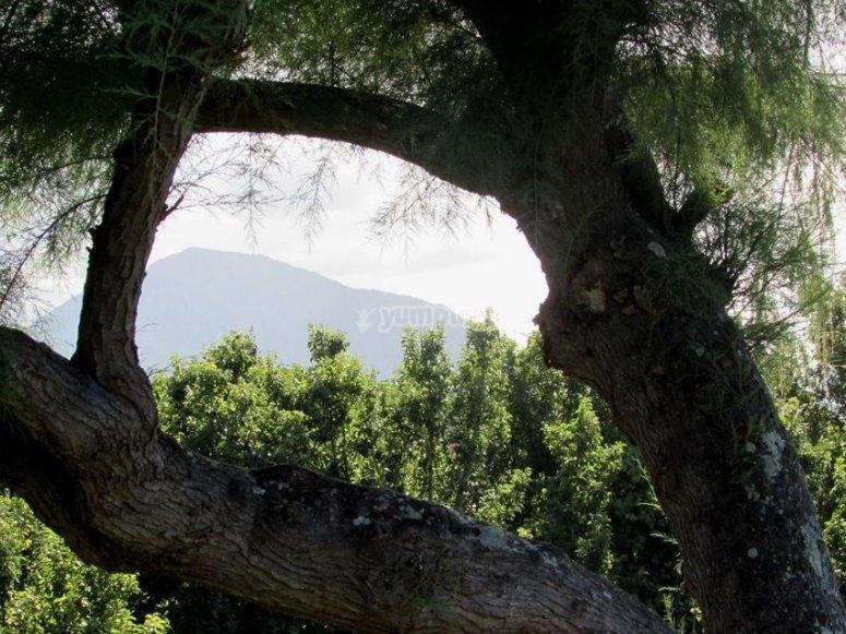 在阿斯图里亚斯绿地