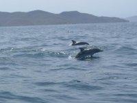 Avistamiento de cetáceos en Lanzarote