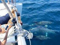 Paseo de 2 horas en Catamarán Estepona para Niños