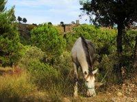 hipica旅游骑马游览塔拉曼卡