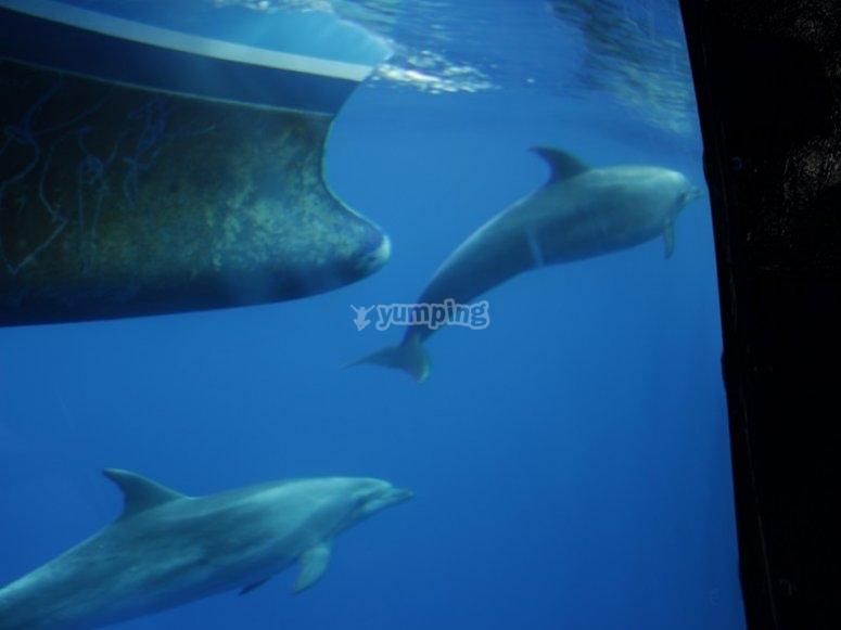 Delfines debajo del agua