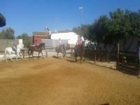 En la pista con los caballos