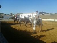 Alumnos aprendiendo técnicas de equitación