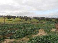 Vista de la zona Sur del campo