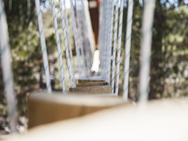 挂在树间的桥梁