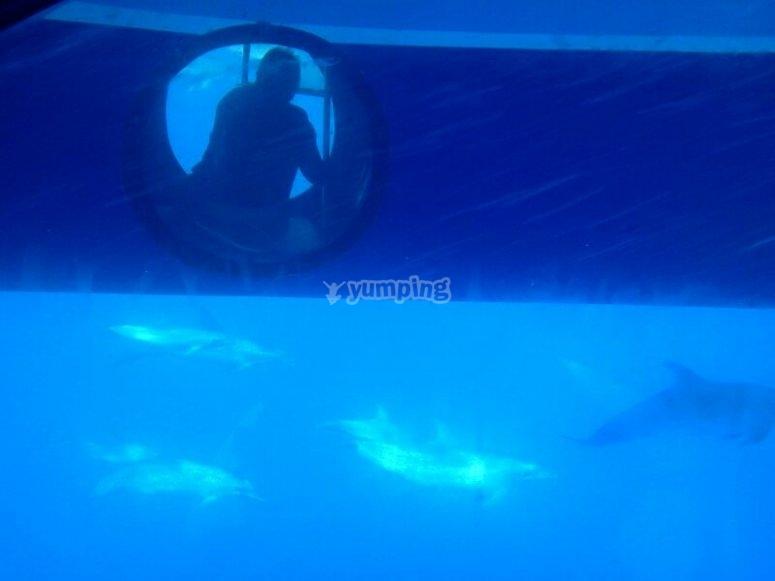 delfines vision nueva