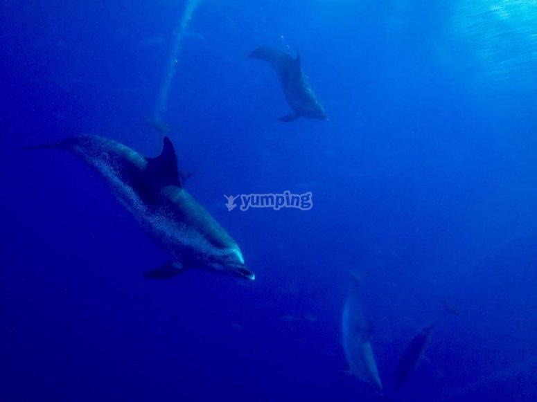 delfines vision submarina