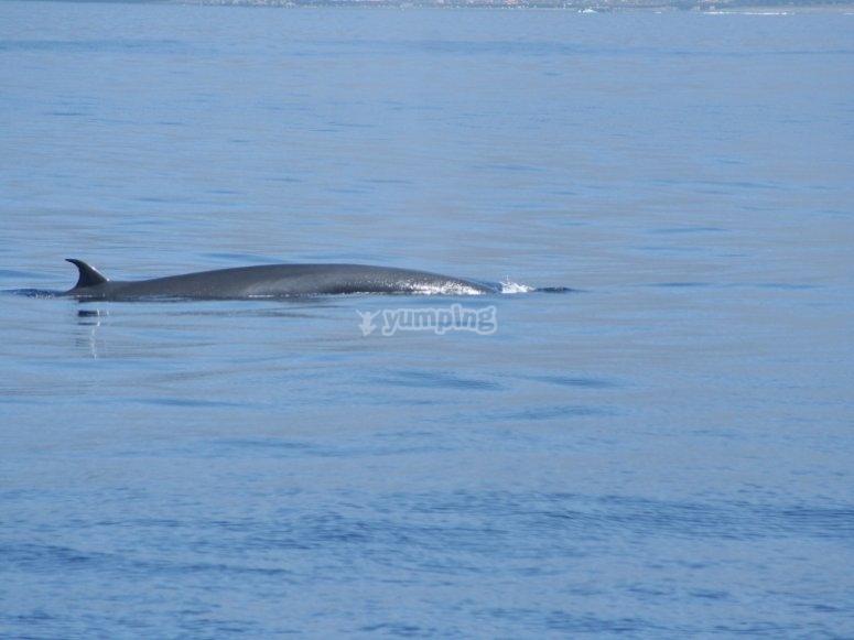 Podemos divisar ballenas