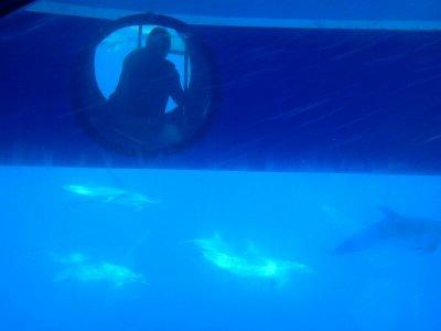 来自Tazacorte儿童的鲸类动物