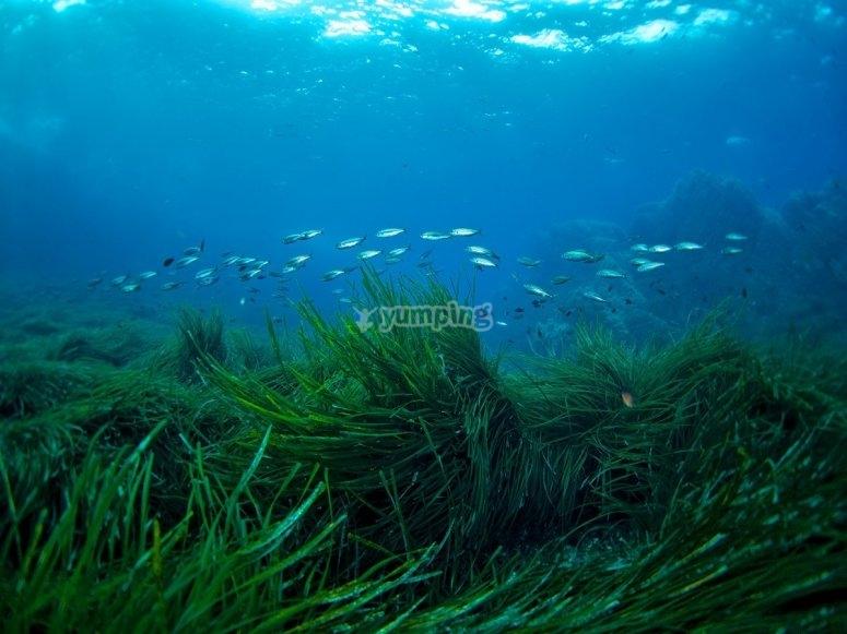 阿尔梅里亚海岸的休闲潜水