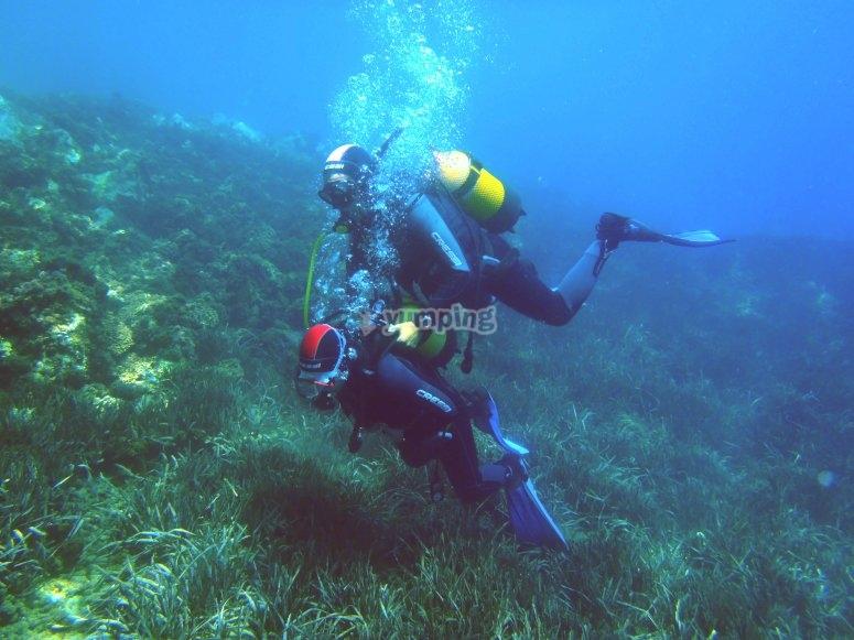与教练一起潜水