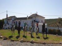 Equestrian group prepared to stroll through Casarabonela