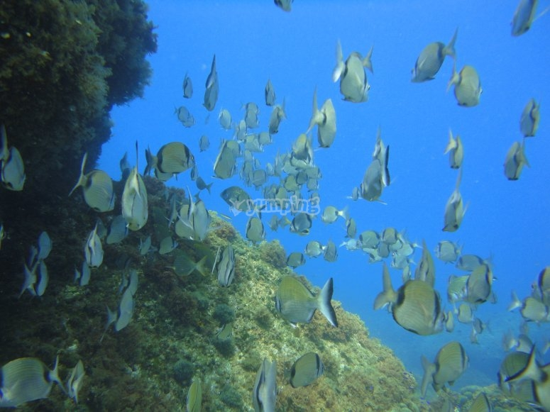 ¡Disfruta la fauna marina!