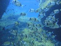Fondo marino de la Costa Brava
