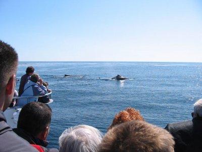 从儿童船上看拉帕尔马的鲸目动物
