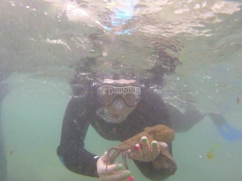 Conociendo la fauna marina