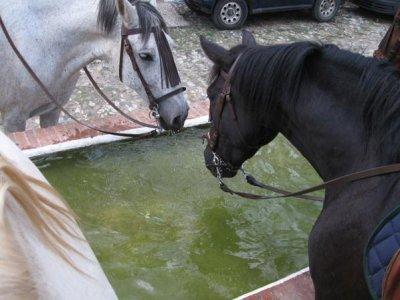 Montar en coche de caballos Picos de Arocha 1 h