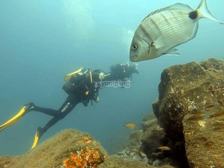 潜水的潜水做法