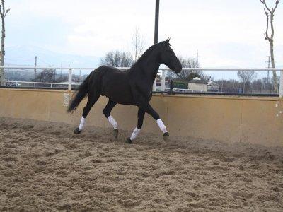 Centro Hípico Buitrago Clases de Equitación