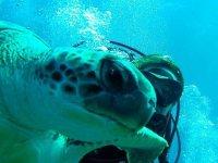 Selfie con la tortuga