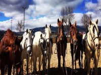 Nuestro equipo de caballos listos para la formación