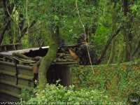 Airsoft en bosque