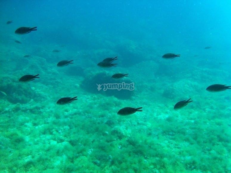 Rico fondo marino