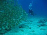 Persiguiendo a la fauna submarina de Tenerife