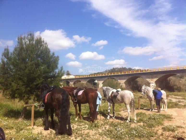 Descanso durante clase de equitación