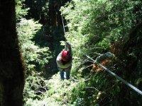 Circuitos de árboles en Granada