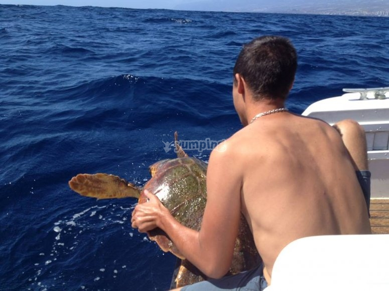 Devolviendo la tortuga al mar